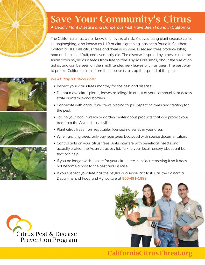 Photo of the Citrus Greening Disease Flyer in English.