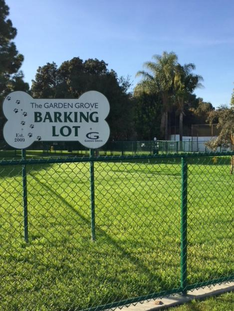 Dog Park Photo